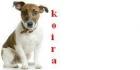 Opi pennusta koiraksi!