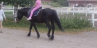Ratsastus ja hevosetponit