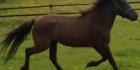 Hevosetja ratsastus