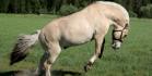 Super Ihanat hevoset