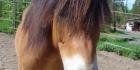 pony and horse