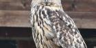 Suomen pöllövisa