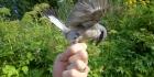 Lintuharrastus