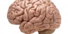 Hormonit ja hermot ja aivot
