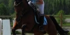 Hevos kilpailut