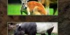 Animal Kingdom Quiz
